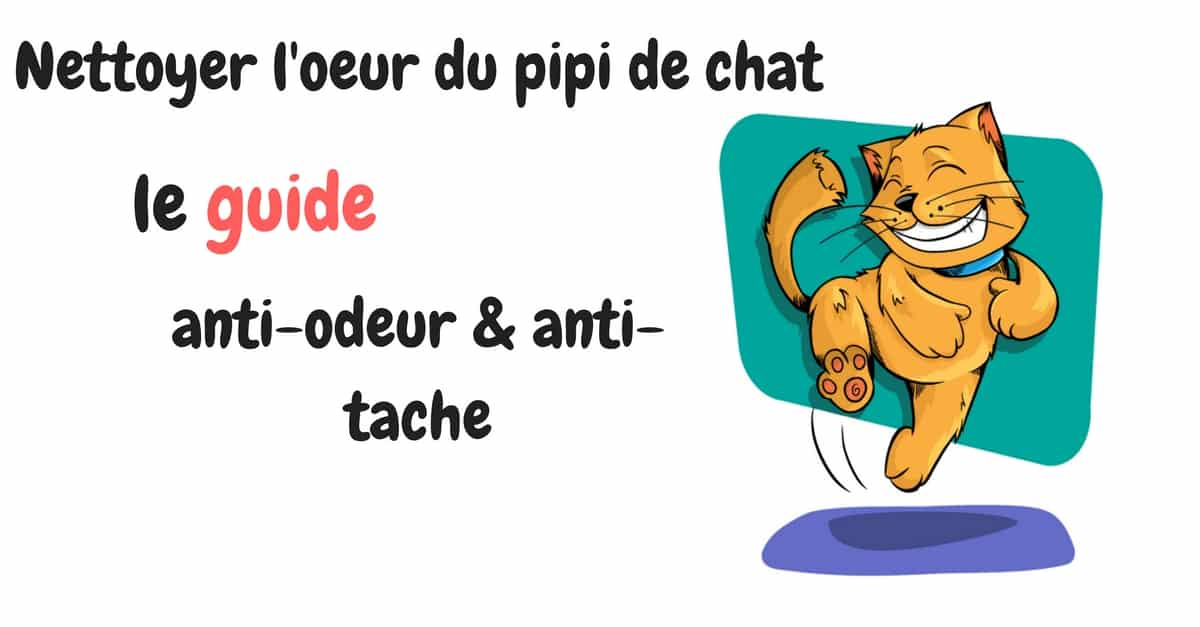 Comment Enlever L Odeur D Urine De Chat Le Guide