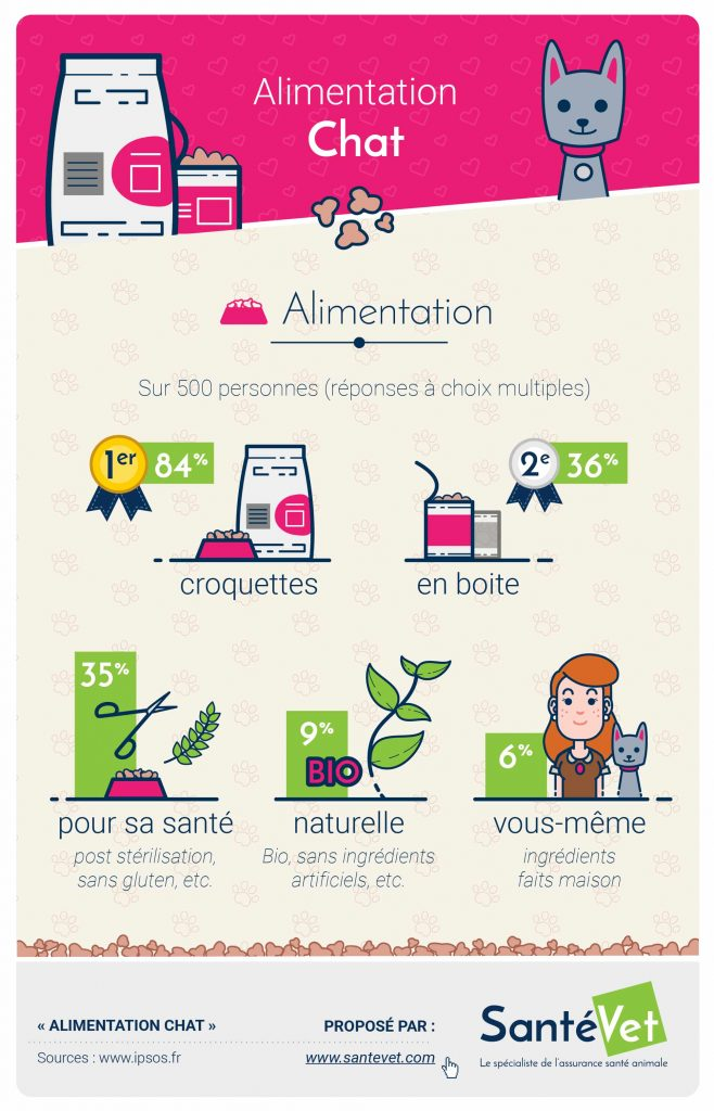 Infographie Alimentation Chat