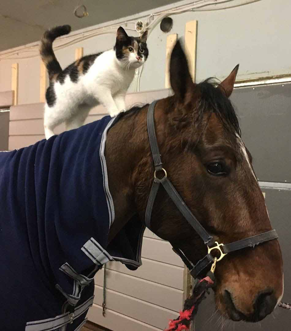Friendly cat in stable
